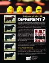T.Roche Bull Flyer_Inside
